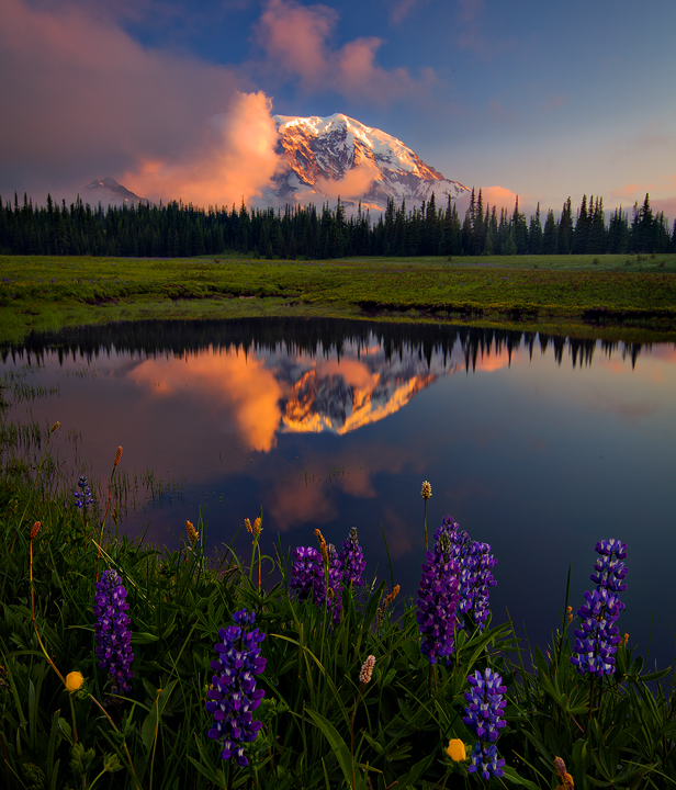 Peaking Flowers at Mt. Rainier
