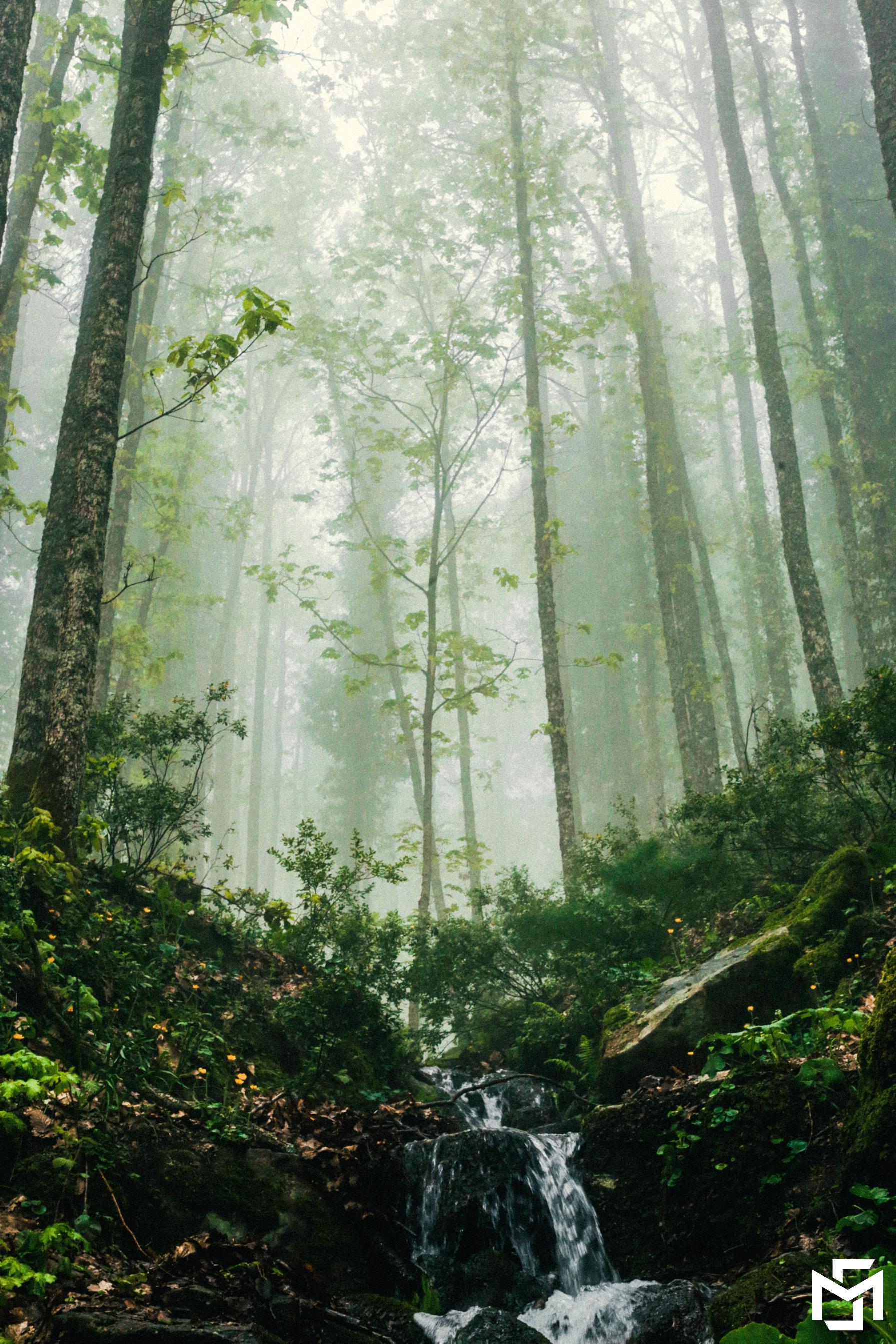 the rainforest of akradou