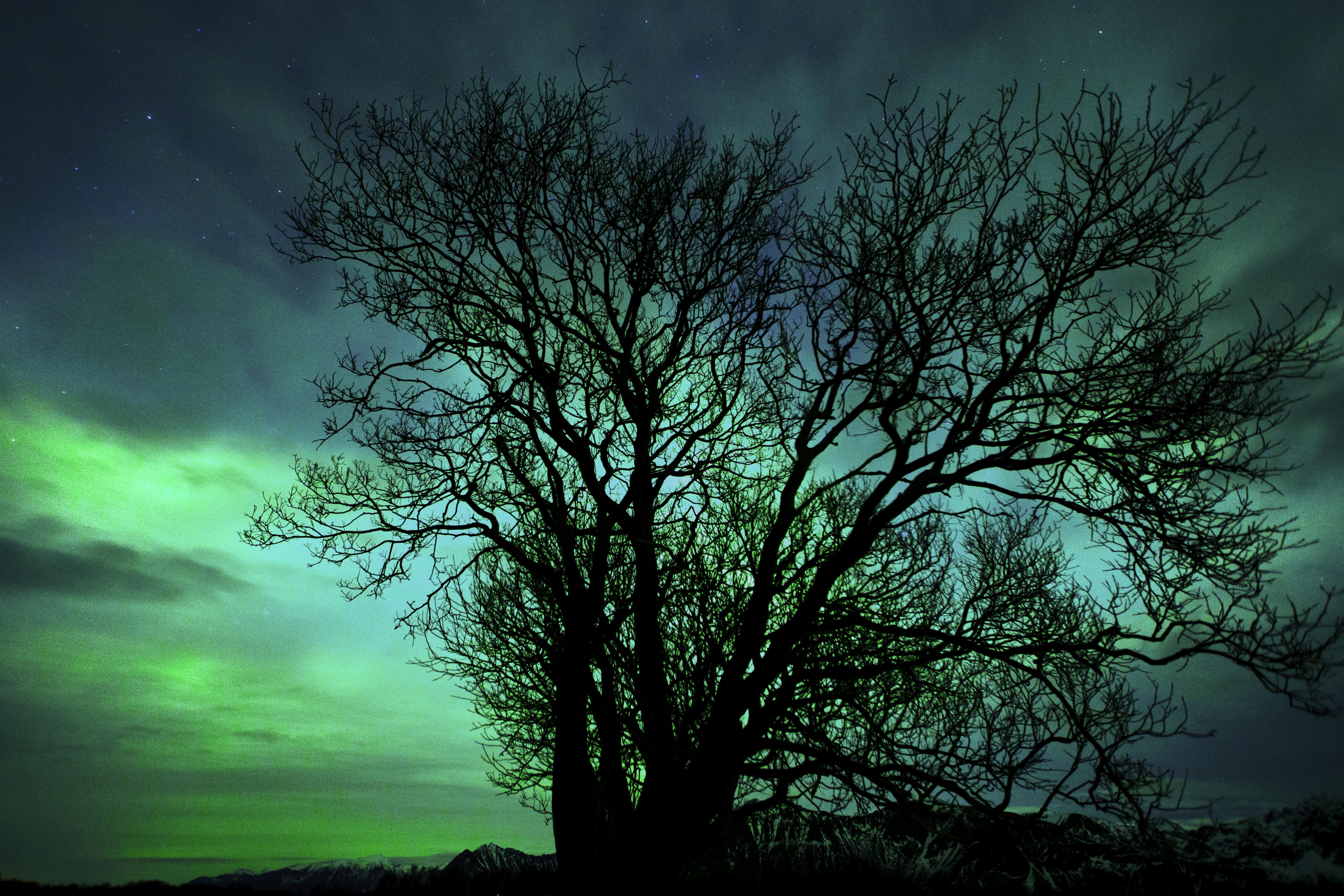 Aurora Borealis Lone Tree