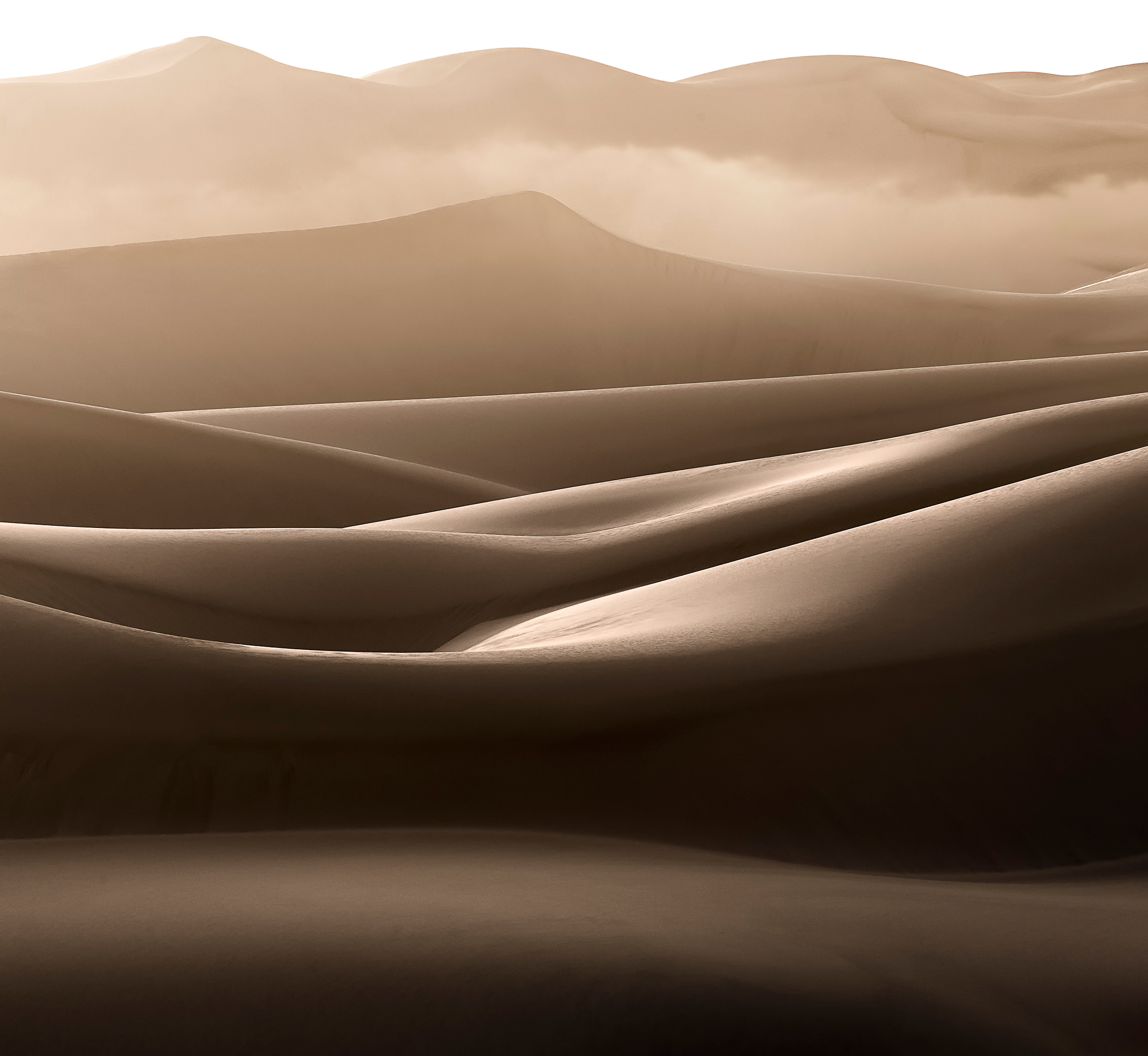 Late Afternoon Fog in the Dunes