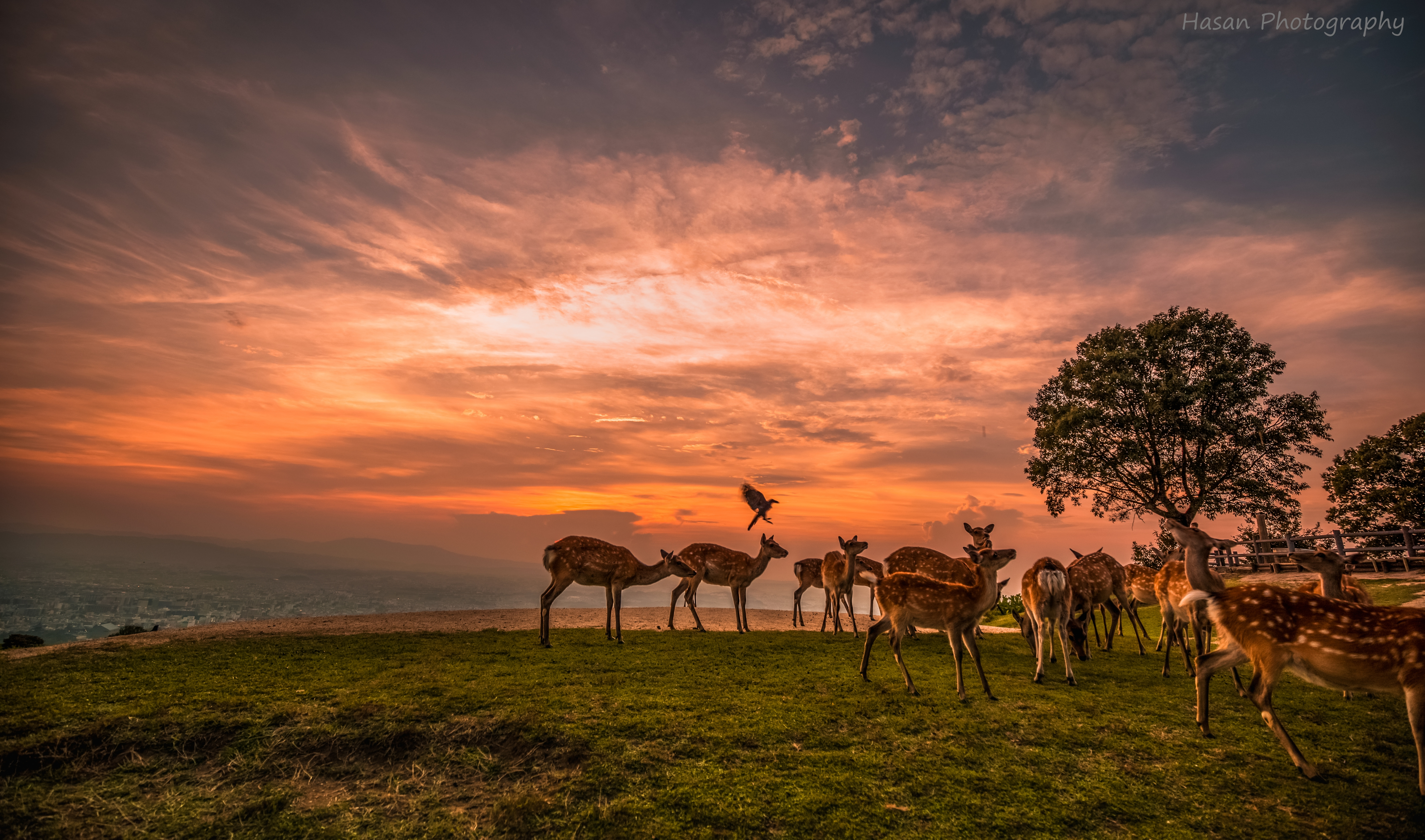 Sunset with Deer.