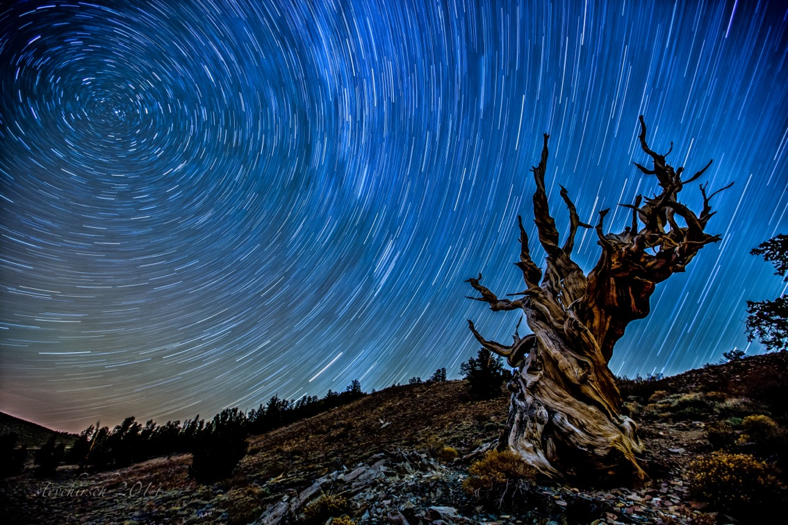 Bristlecone pine star trails