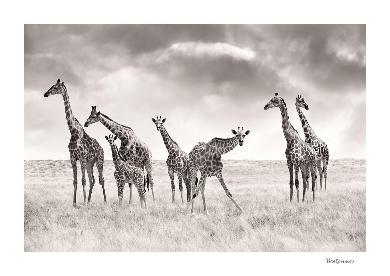 Tower-of-Giraffes