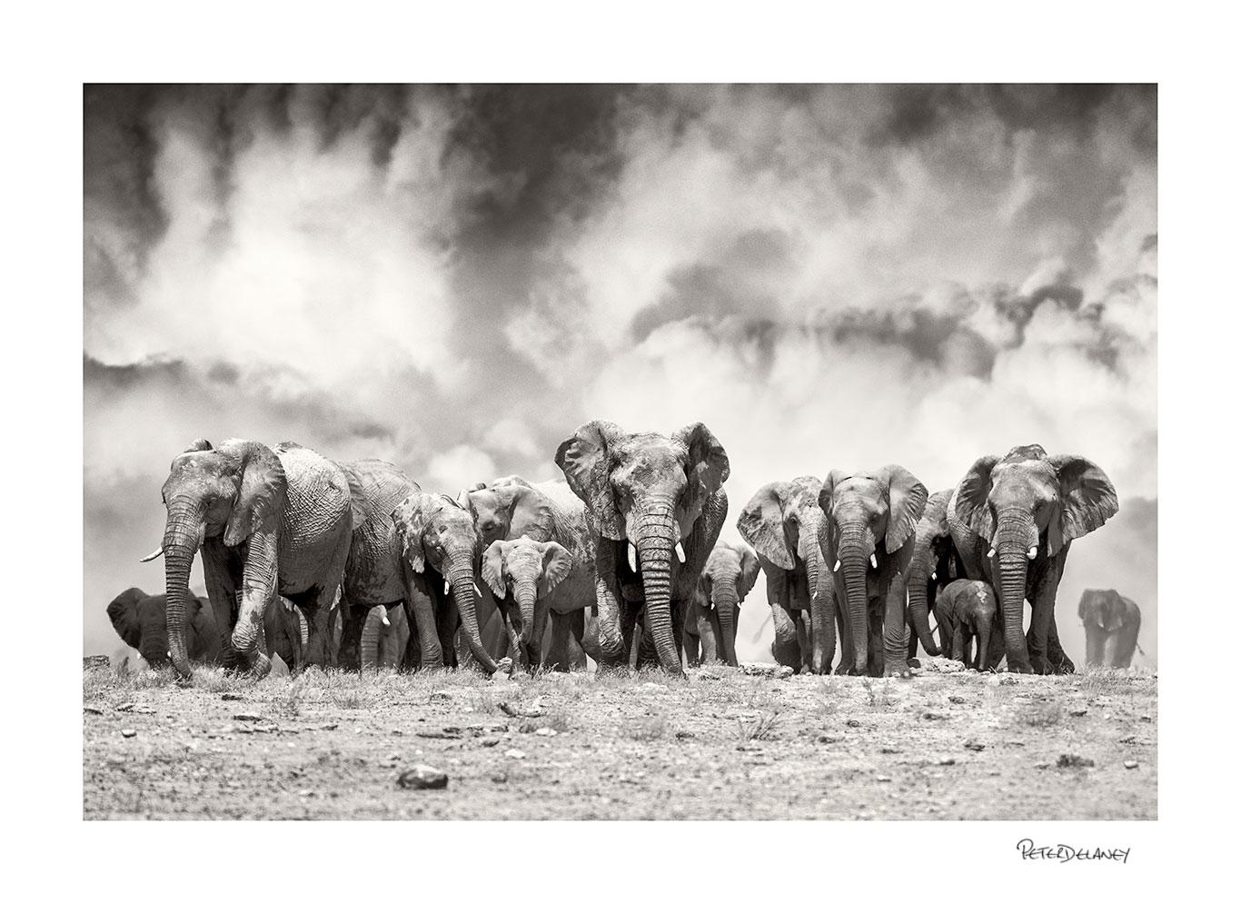 Elephant-Ridge