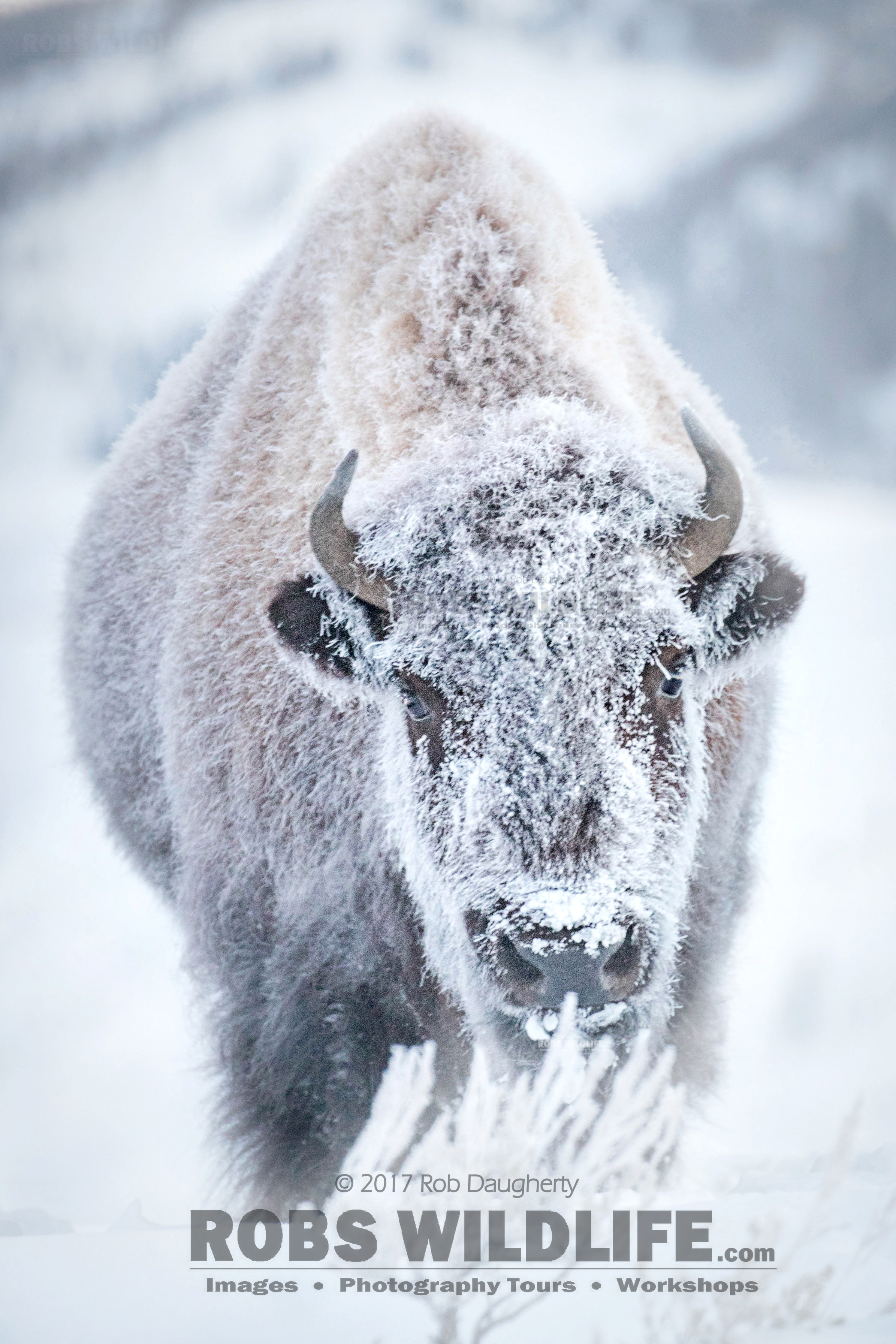 Surviving North American Winters's photos