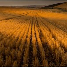 Palouse, Echoes of Tuscany