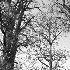 Landscapes/Trees n stuff