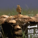 Birds of Seregeti National Park