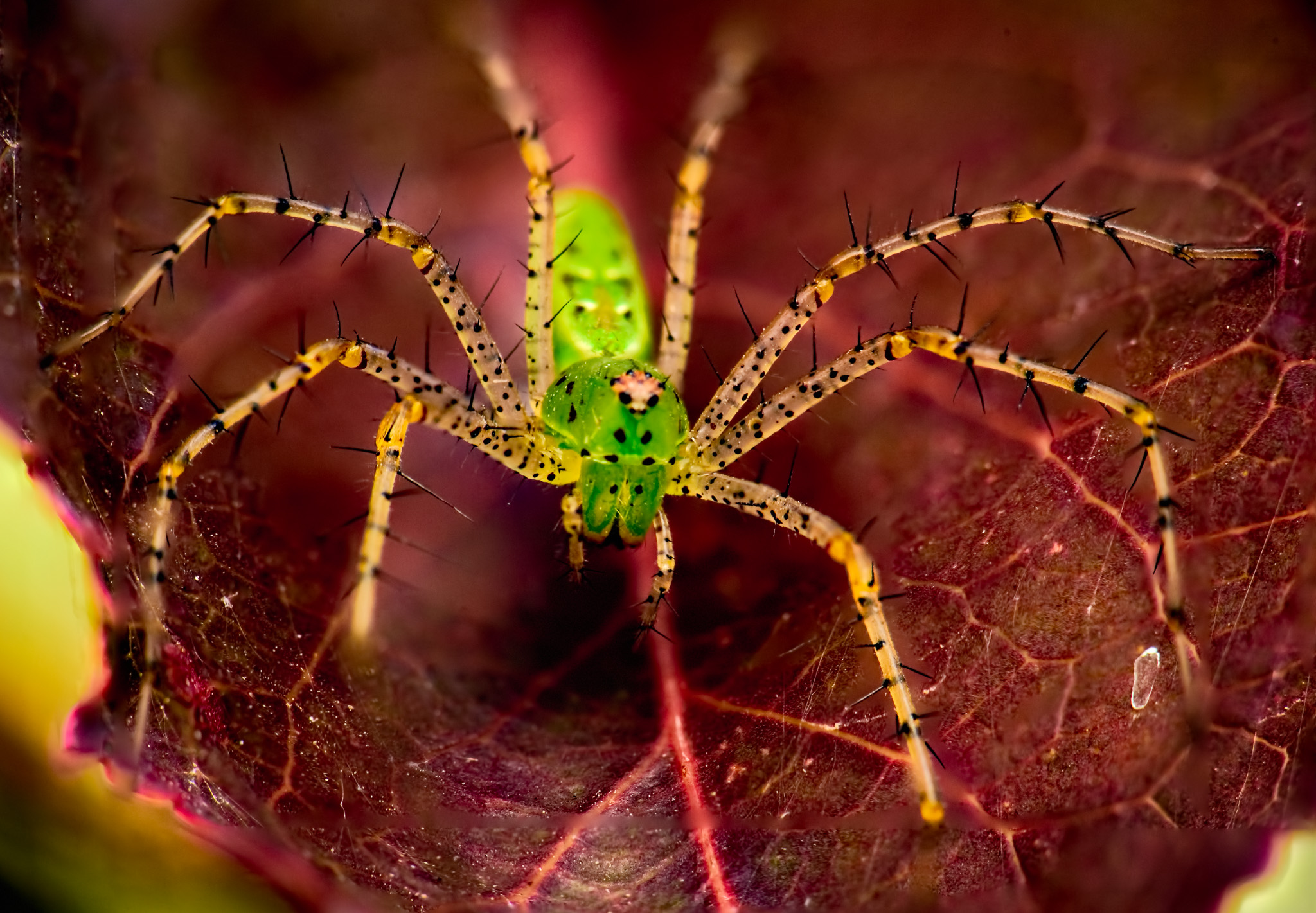 A Very Green Spider