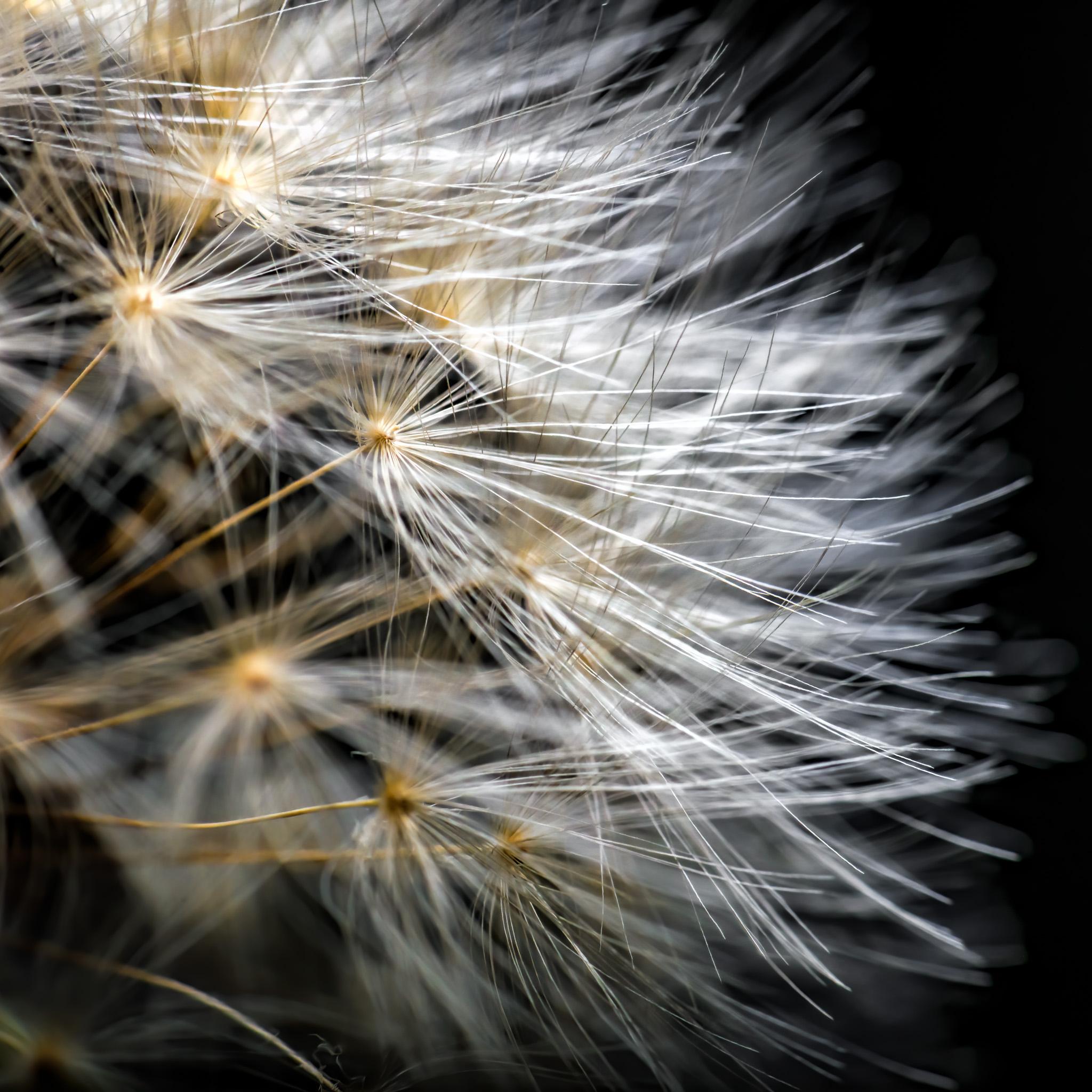 Seeds II