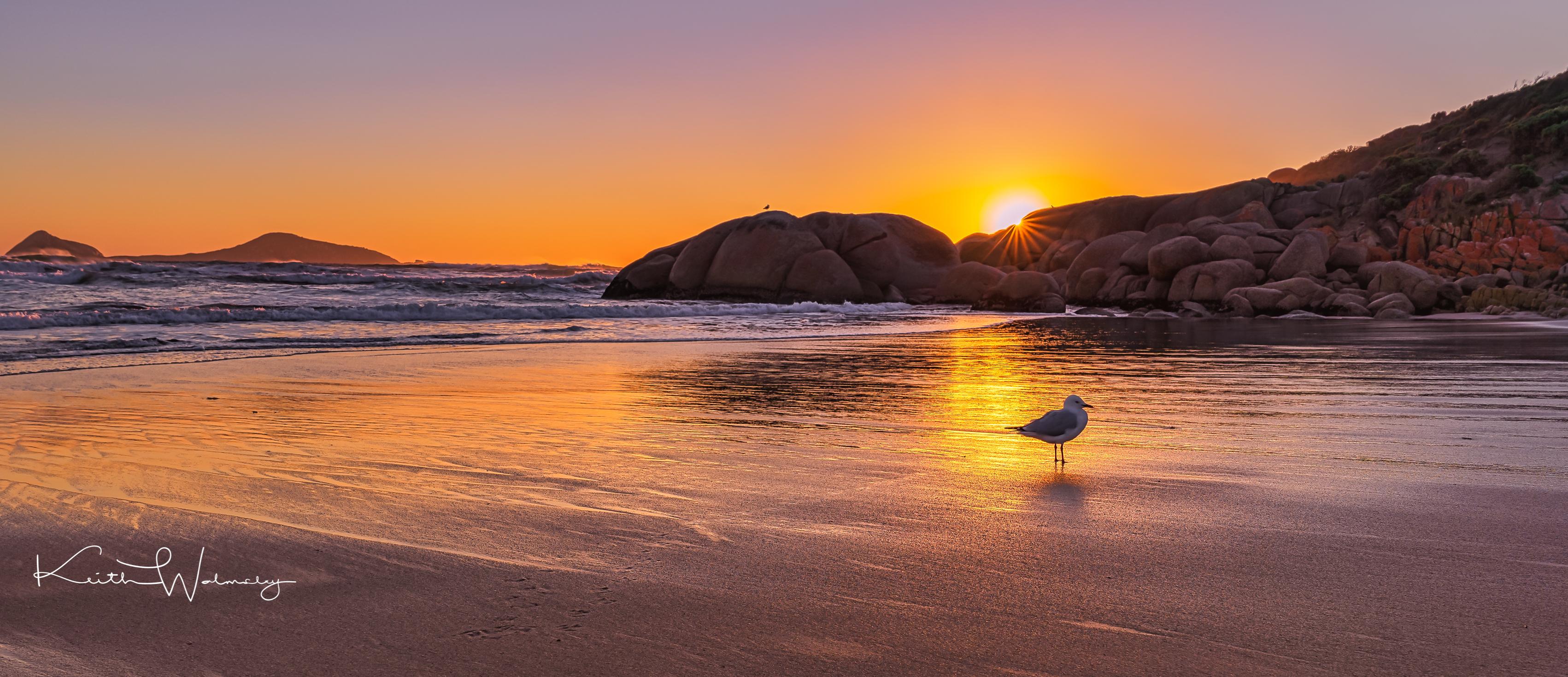 Sea Gull Sunset