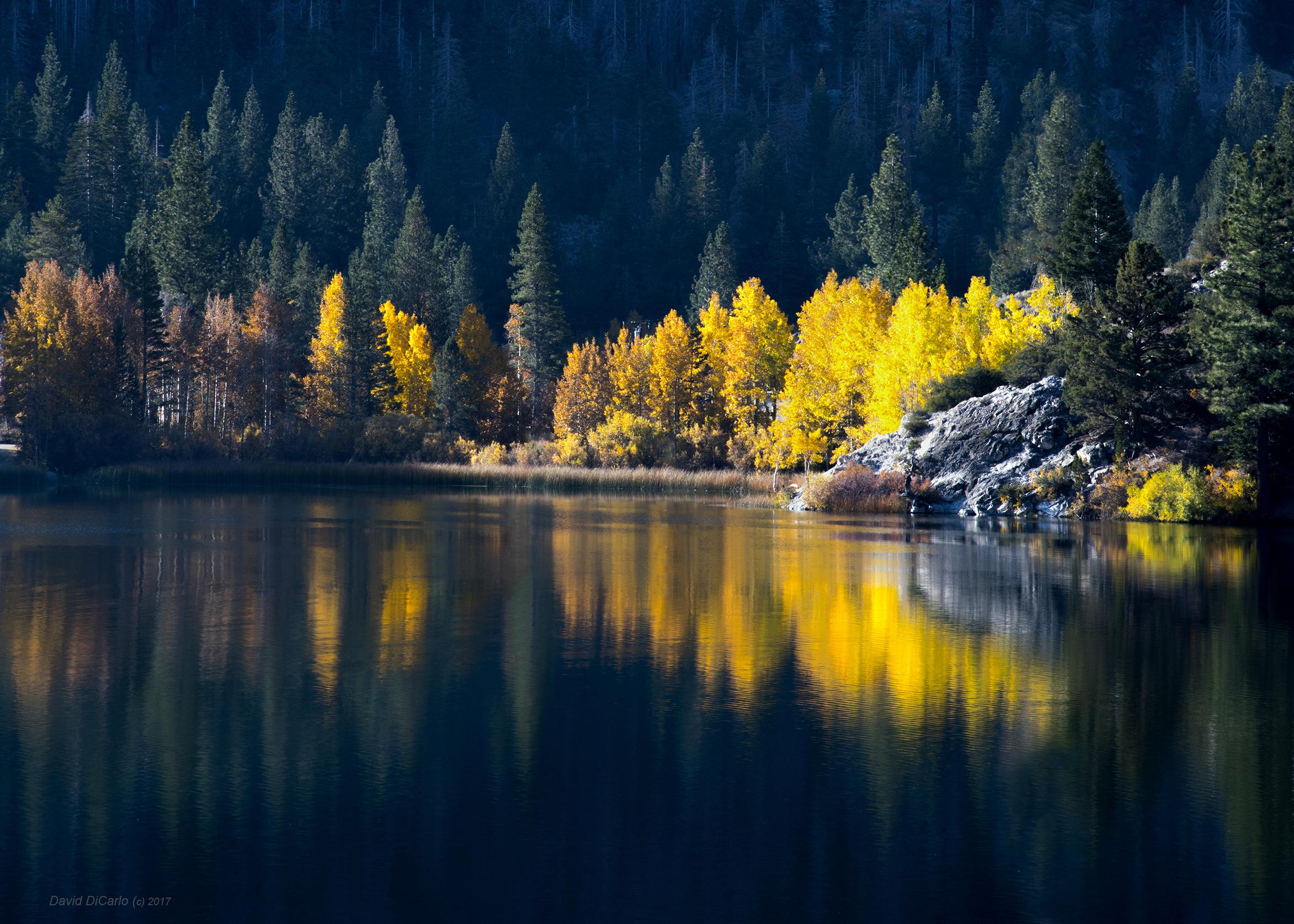 Autumn Dawn Gull Lake