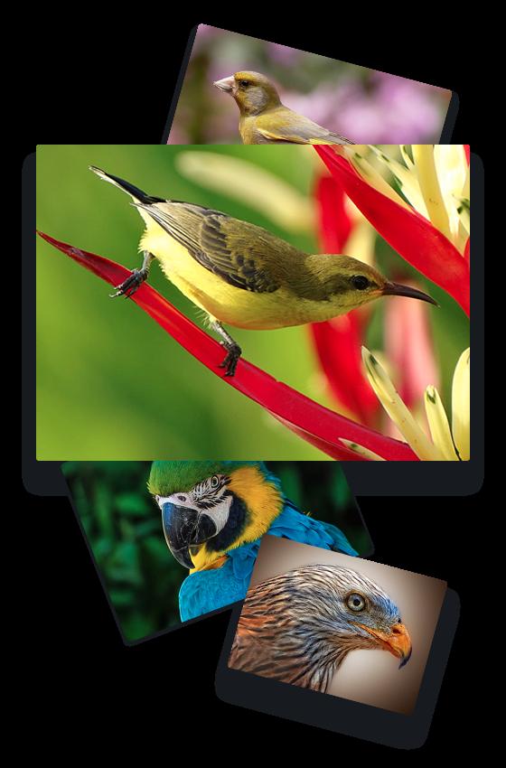 how to teach your bird to talk cd