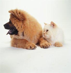 Pet Photography image