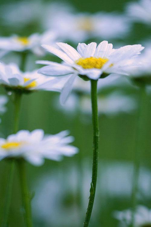 daisy-file-1 image