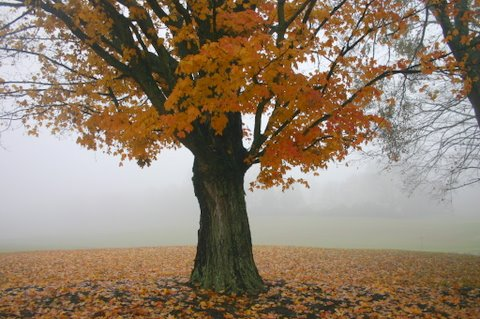 fall-tree image