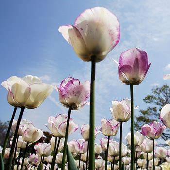 flower_nice image