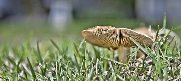mushroom1 image