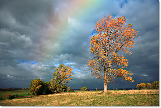 rainbow-trees image