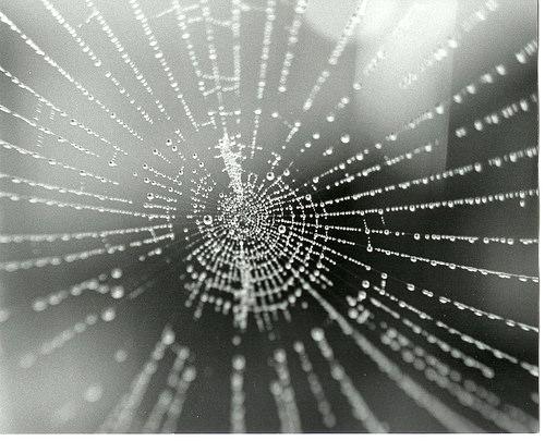 spiderweb6 image