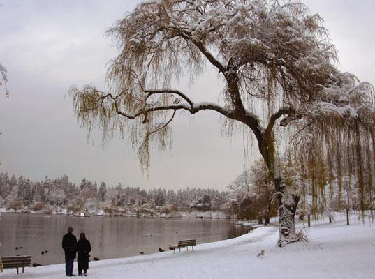 winter_photo_landscape image